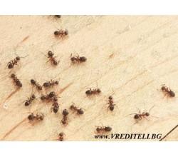 Как да се справим с мравки в къща или двор?