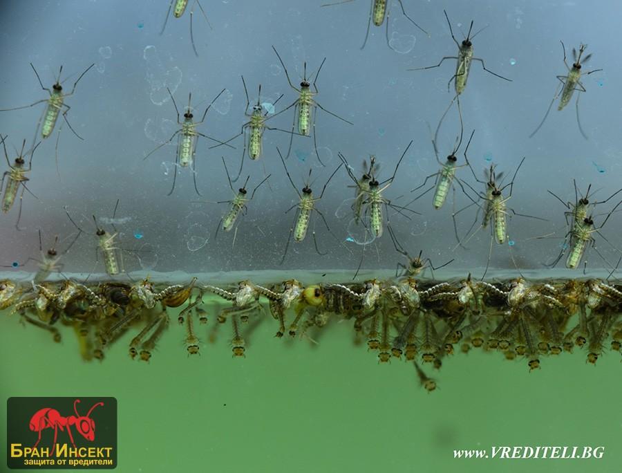 Водоизточник в който се размножават комари