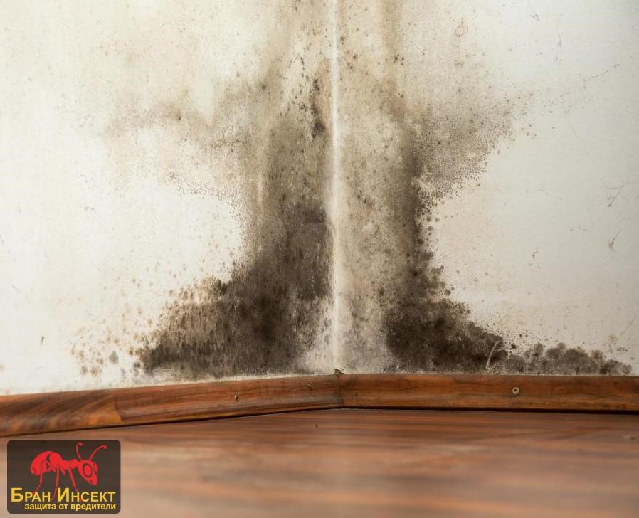 Дезинфекция срещу мухъл и плесен - Бран Инсект