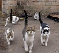 Снимки на котки - Бран Инсект
