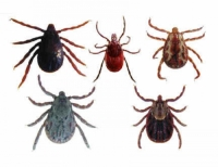 Ticks - destruction, protection and combat