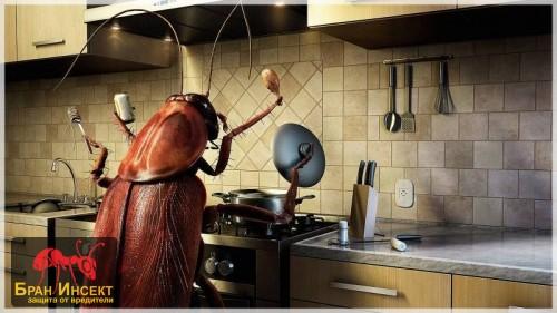 Помощ хлебарки!