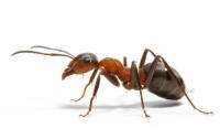 муравьями