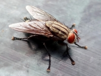 Flies - destruction, protection and combat