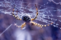Spiders- destruction, protection and combat