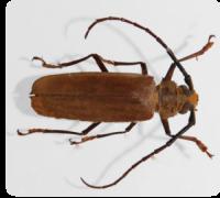 Woodworm- destruction, protection and combat