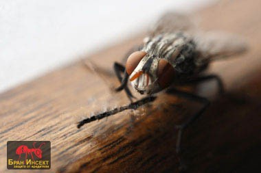 Борба с мухи