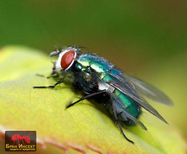 Унищожаване на мухи