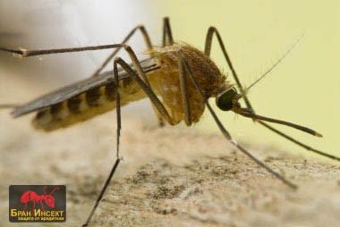 Пръскане за комари