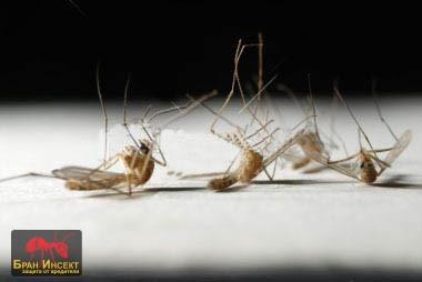 Унищожаване на комари