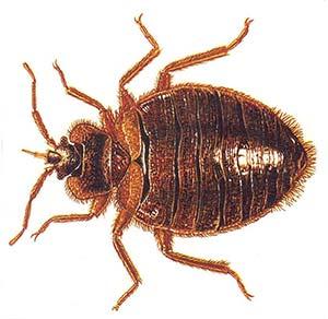 Дървениците – паразитите, за които знаем малко