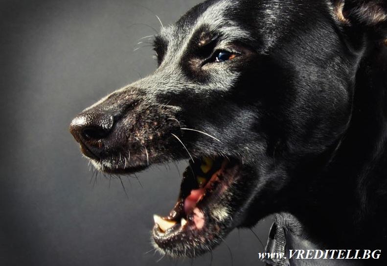 Най-опасните зарази и болести, пренасяни от кучета