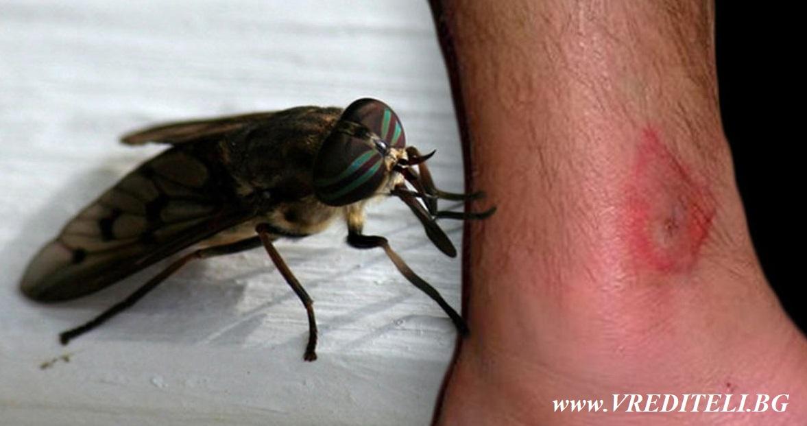 Конска муха - щръклица или овод