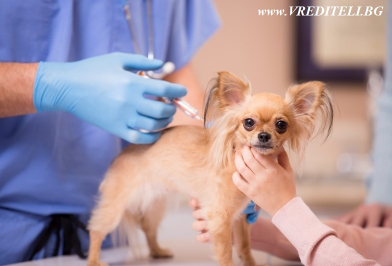 Ваксинирано куче