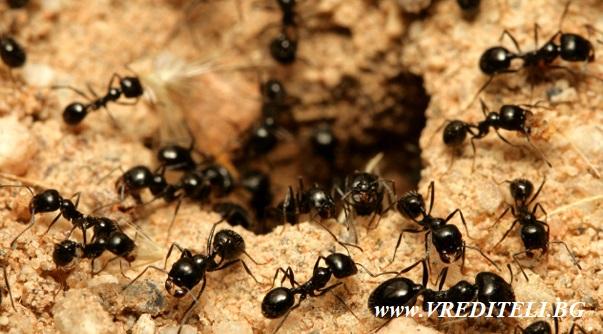 Mравките в двора