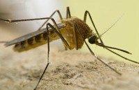 Риск при използване на спрей срещу комари