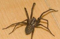 Арахнофобия или страхът от паяци