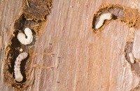 Дървояди