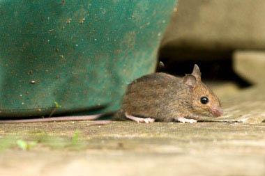 Борба с мишки