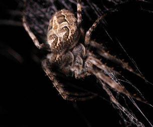 Унищожаване на паяци - унищожаване и борба с тях 2