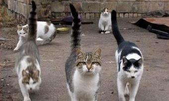 Борба с котки