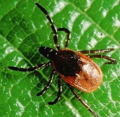 Фирма за Дезакаризация - борба с акари - Бран Инсект