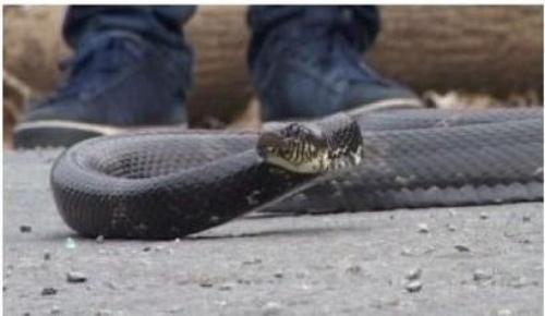 Херпетолог - улавяне на змия