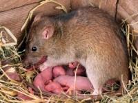 Помощ мишки