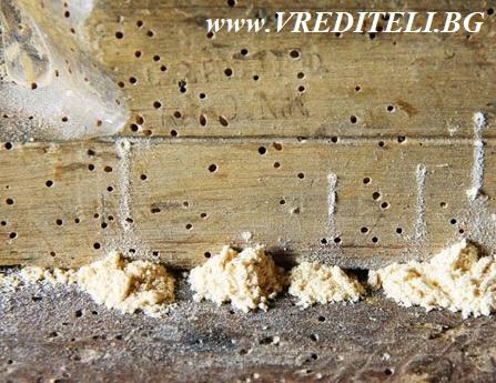 Дупки на дърояд в дървен материал